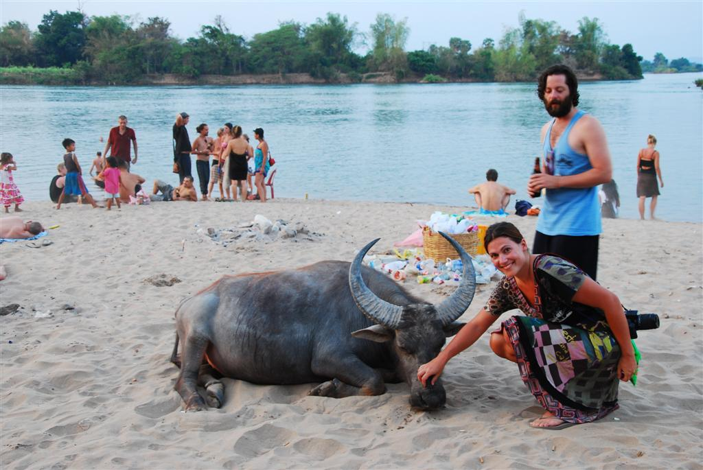 Been there, Don Det! Or: Swimming with buffaloes, showering with Gekkos